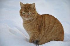 Un gato de la caza Imagen de archivo libre de regalías
