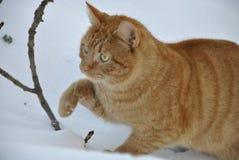 Un gato de la caza Foto de archivo libre de regalías