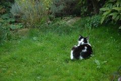 Un gato del jardín que miente en hierba Imágenes de archivo libres de regalías