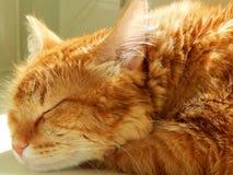 Un gato del jengibre que duerme en el sol Fotografía de archivo libre de regalías