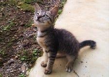un gato del pueblo que está mirando para arriba imágenes de archivo libres de regalías