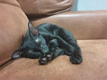 Un gato del sueño fotos de archivo libres de regalías