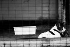 Un gato dentro de una jaula Fotos de archivo libres de regalías