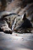 Un gato el dormir Fotografía de archivo libre de regalías