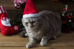 Un gato en un casquillo del ` s del Año Nuevo y juguetes del piel-árbol Imagen de archivo