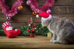 Un gato en un casquillo del ` s del Año Nuevo y juguetes del piel-árbol Imagen de archivo libre de regalías