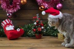 Un gato en un casquillo del ` s del Año Nuevo y juguetes del piel-árbol Foto de archivo