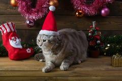 Un gato en un casquillo del ` s del Año Nuevo y juguetes del piel-árbol Fotografía de archivo