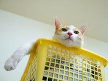 Gato divertido en cesta Foto de archivo libre de regalías