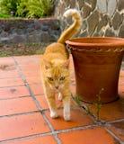 Un gato en el Caribe fotografía de archivo libre de regalías
