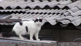 Un gato en el tejado almacen de metraje de vídeo