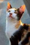 Un gato en el top del tejado Fotos de archivo