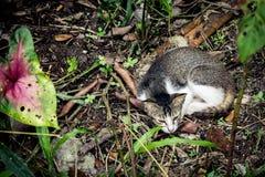 Un gato en jardín Foto de archivo