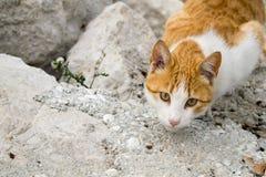 Un gato en la caza Foto de archivo