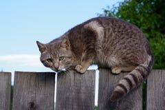 Un gato en la cerca foto de archivo