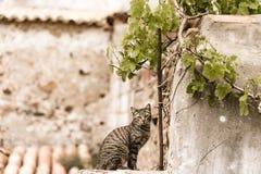 Un gato en la pared con el vino hojea foto de archivo