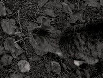 Un gato en la tierra foto de archivo