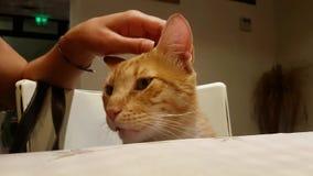 Un gato en un restaurante metrajes