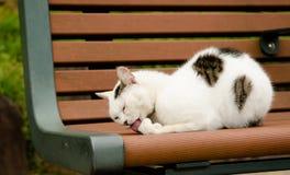 Un gato en un banco que se lame la pata Imagen de archivo
