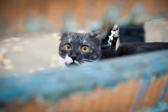 Un gato en un correo que juega en el banco de madera Imagen de archivo libre de regalías