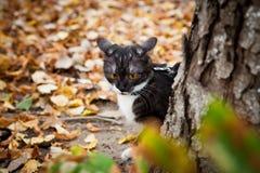 Un gato en un correo que juega en hojas secas de la caída Fotos de archivo
