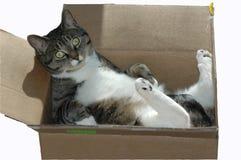 Un gato en una caja de cartón Foto de archivo libre de regalías