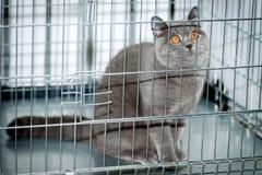 Un gato en una jaula Fotos de archivo libres de regalías