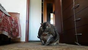 Un gato enfermo muy gordo en el cuarto de la vieja abuela miente en el piso en sus lados gruesos metrajes