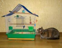 Un gato está cazando un loro Imagenes de archivo