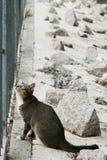 Un gato está mirando para arriba detrás de las barras de metal Imágenes de archivo libres de regalías