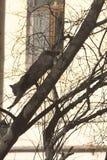 Un gato gris que va abajo del árbol delante de la ventana imagenes de archivo