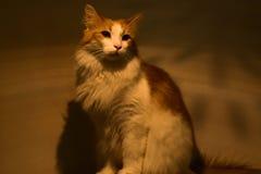 Un gato hermoso fotografía de archivo libre de regalías