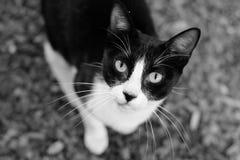 Un gato hermoso Fotos de archivo libres de regalías