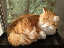 Un gato hermoso con la luz y la sombra imagenes de archivo