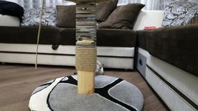 Un gato joven está jugando con posts de la garra almacen de metraje de vídeo