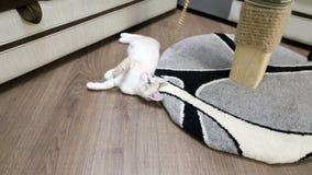 Un gato joven está jugando con posts de la garra metrajes