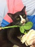 Un gato juguetón Fotografía de archivo libre de regalías