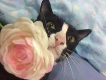 Un gato juguetón Fotos de archivo