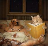 Un gato lee cuentos foto de archivo