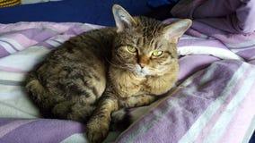 Un gato lindo Fotos de archivo libres de regalías