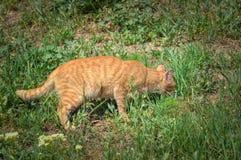 Un gato lindo en la hierba está buscando la comida foto de archivo