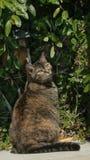 Un gato lindo en un jardín en el sol del verano Imagen de archivo libre de regalías
