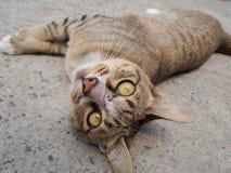 Un gato marrón que mentía en un piso del cemento rodó encima para mirar abajo Imagenes de archivo