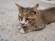 Un gato marrón que mentía en un piso del cemento rodó encima para mirar abajo Foto de archivo