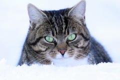 Un gato masculino mira curiosamente fuera de la nieve imagenes de archivo