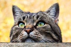 Un gato mira curiosamente sobre una cerca Imagen de archivo