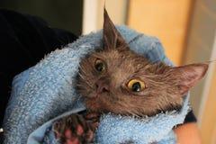 Un gato mojado envuelto en una toalla Imágenes de archivo libres de regalías