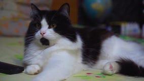 Un gato mullido agradable que miente y que mira algo metrajes