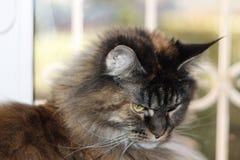 Un gato multicolor con el pelo largo se sienta por la ventana imagen de archivo
