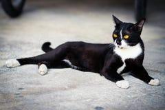 Un gato negro Imágenes de archivo libres de regalías